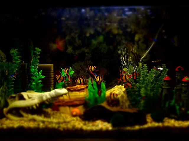 světlo v akváriu