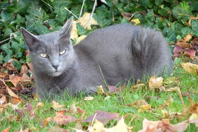 kočka, korat, příroda